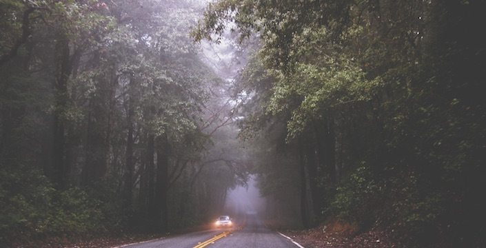 Picture of a foggy treelined road